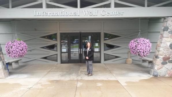 International Wolf Center, Ely