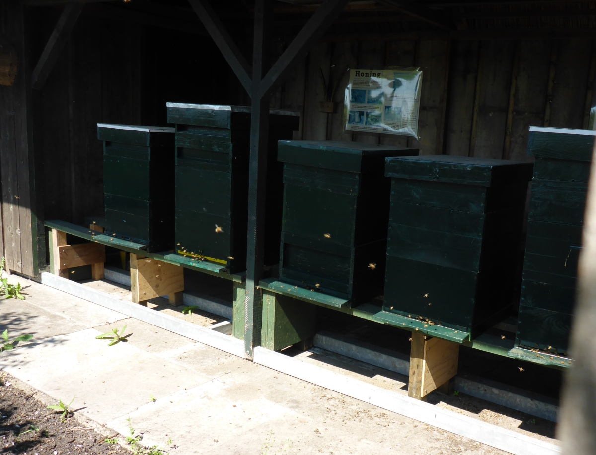 Bee hives at the gardens