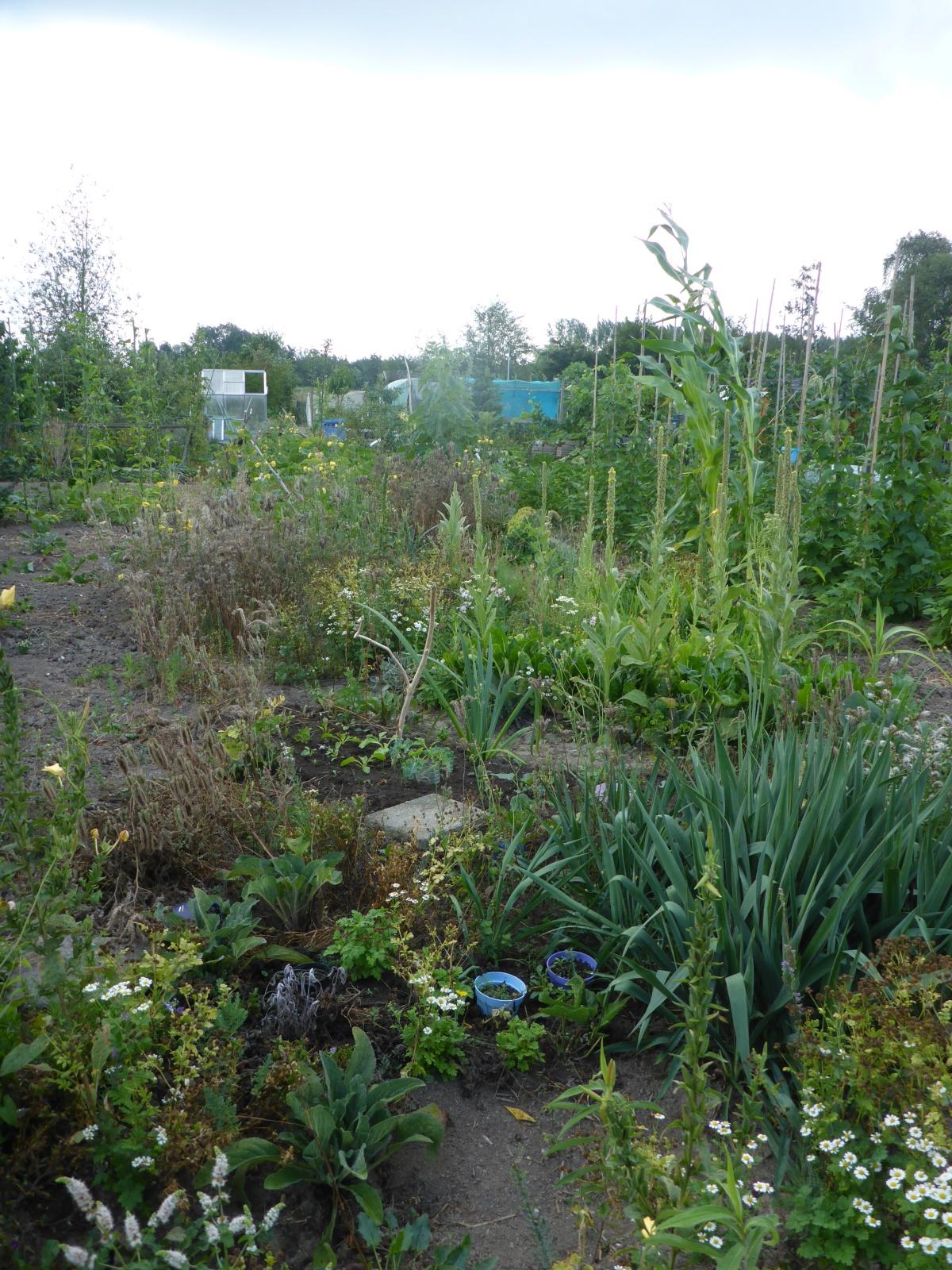 Roos Zwart rental garden
