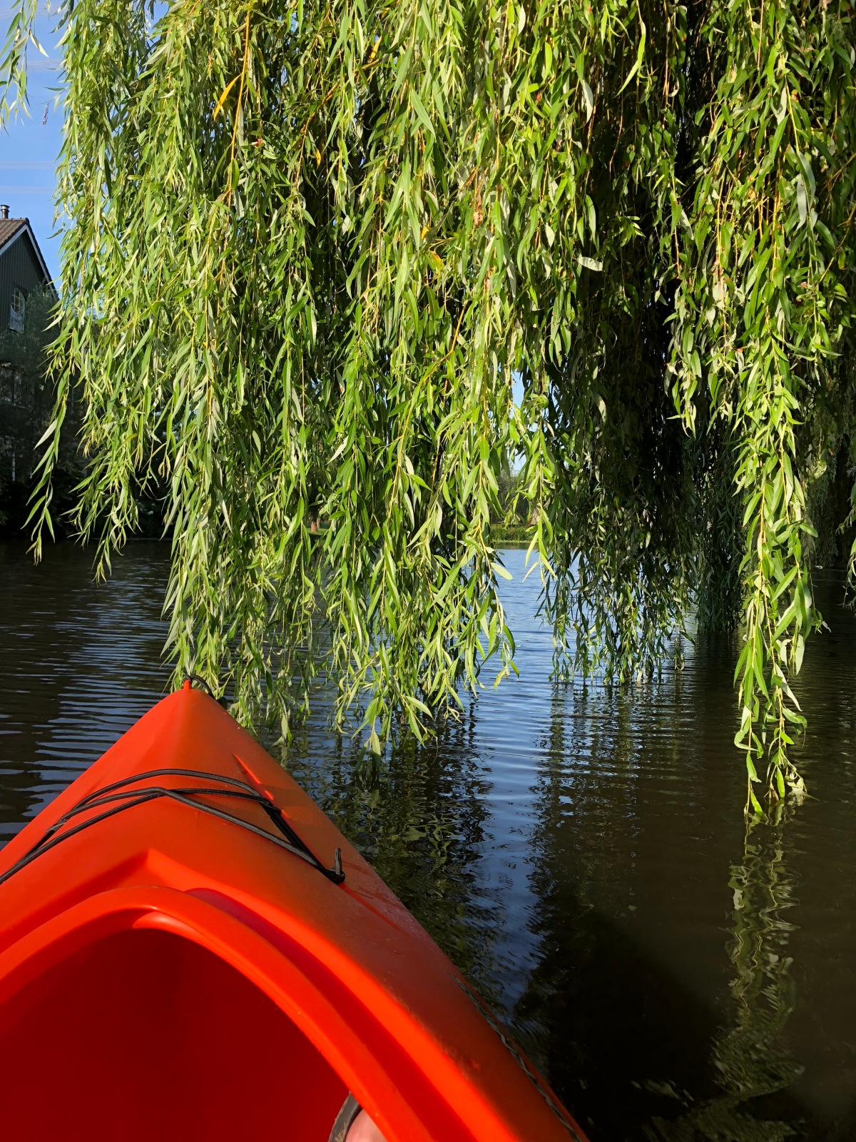 Paddling under the Willow Tree my version of Nature Bathing