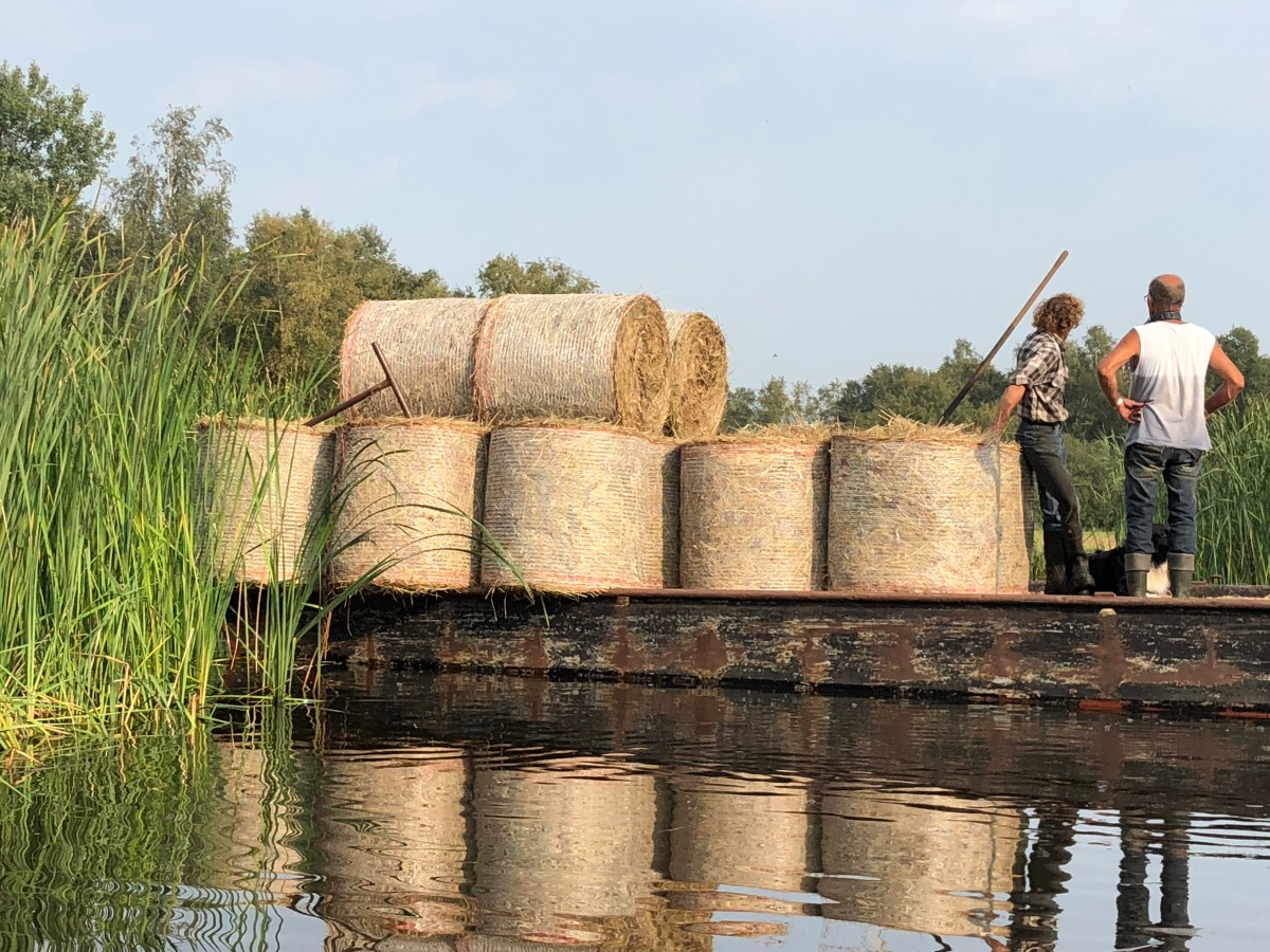 Reed barge in the Weerribben