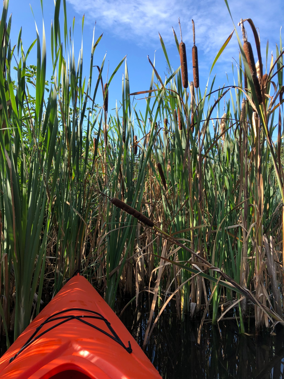 Sitting in the cattails