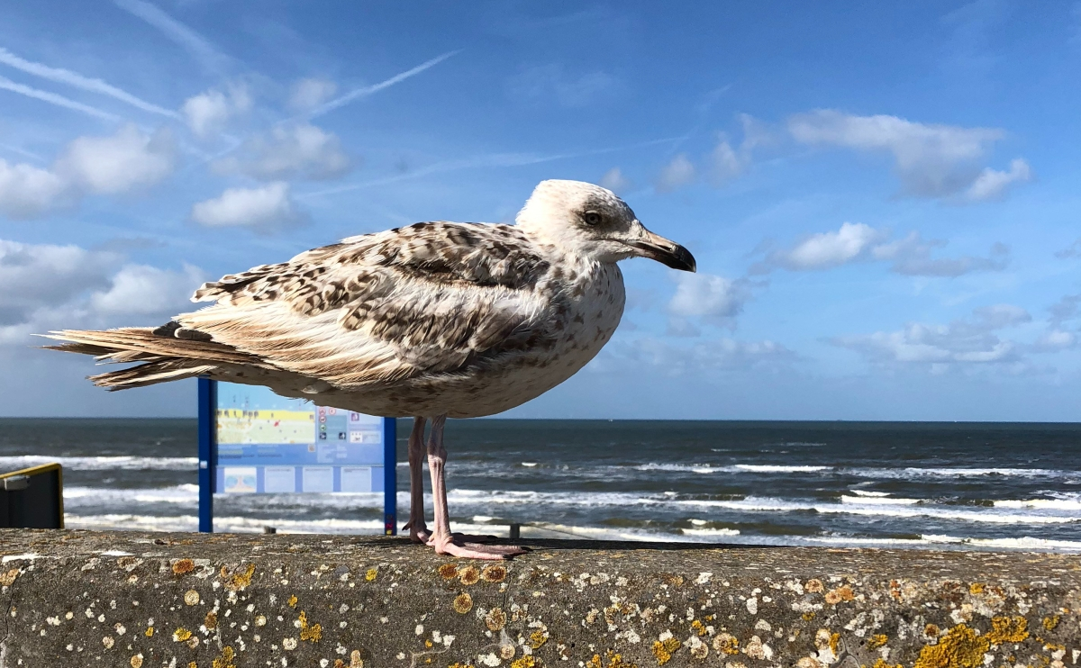 This Seagull was waiting for me to drop a fry...no luck!