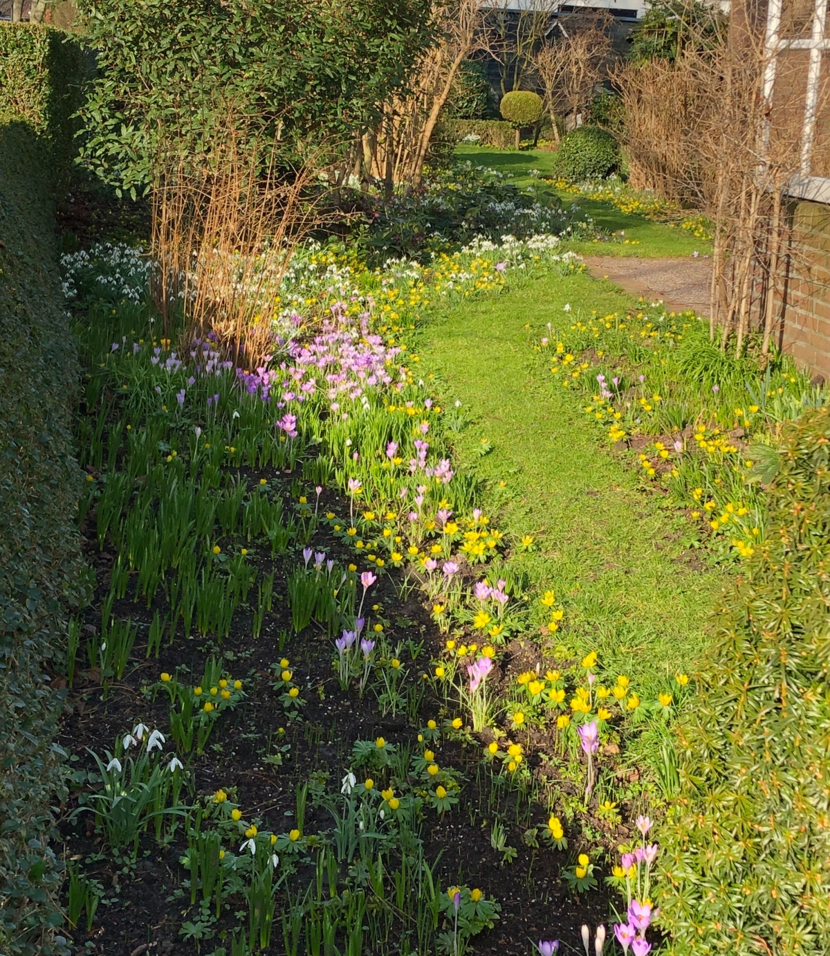Blooming garden of crocus and snowdrops