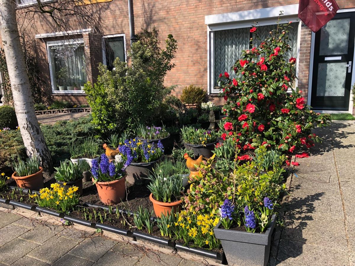 Garden full of color in Lisserbroek