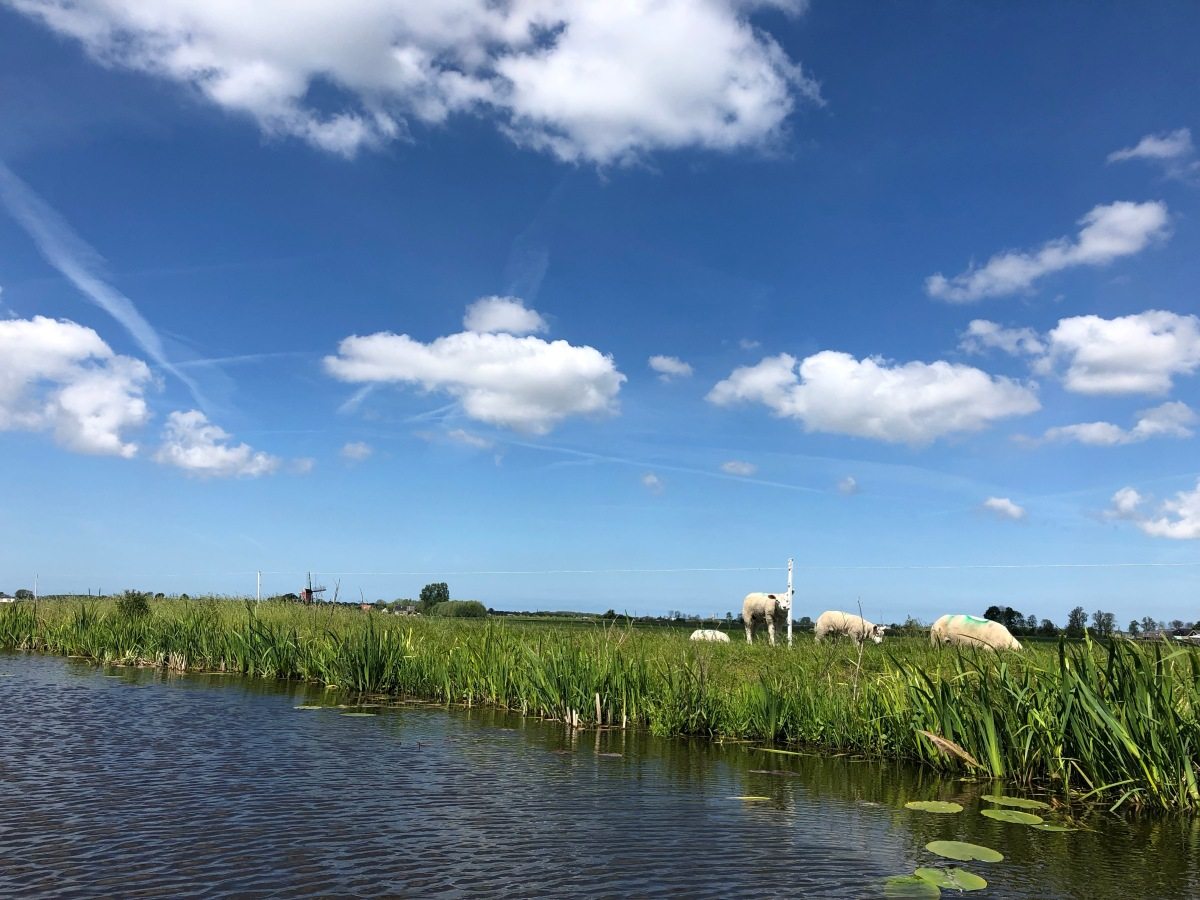 Perfect Dutch Landscape while kayak paddling