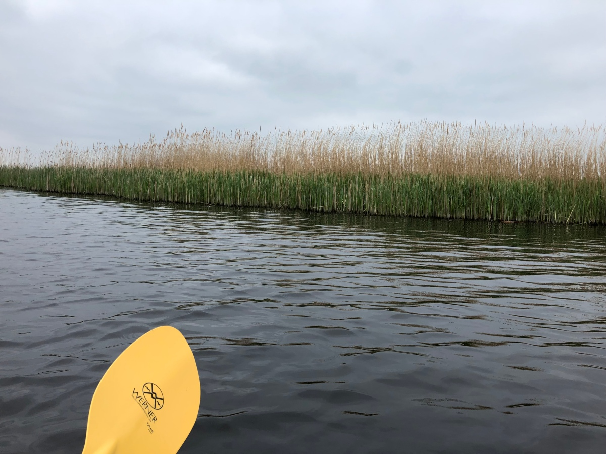 Dutch sky, Dutch reeds, and tons of hidden birds