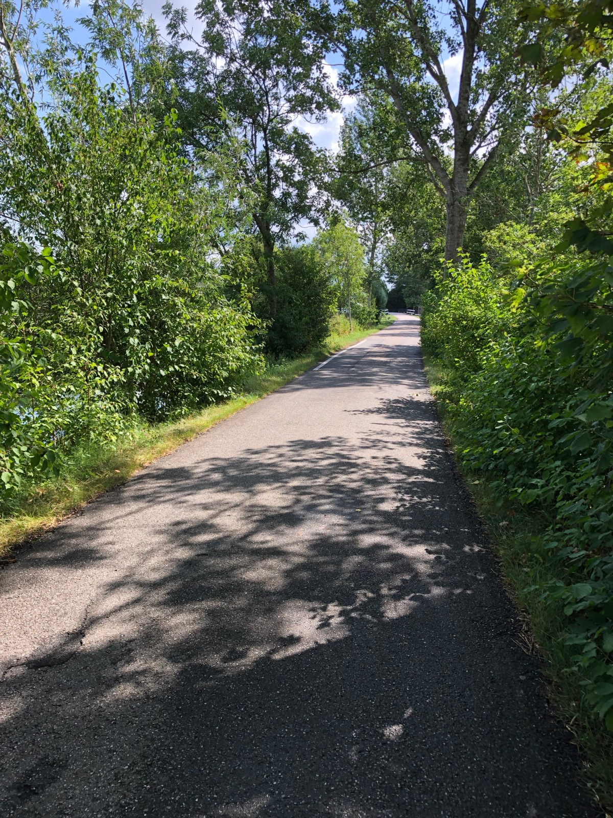 Most of my route was much like this section. Narrow, tree lined and little to no traffic.