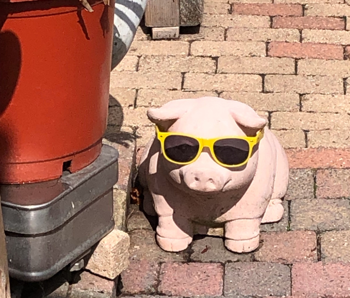 Hummm...A pig with sunglasses! Now that is different!