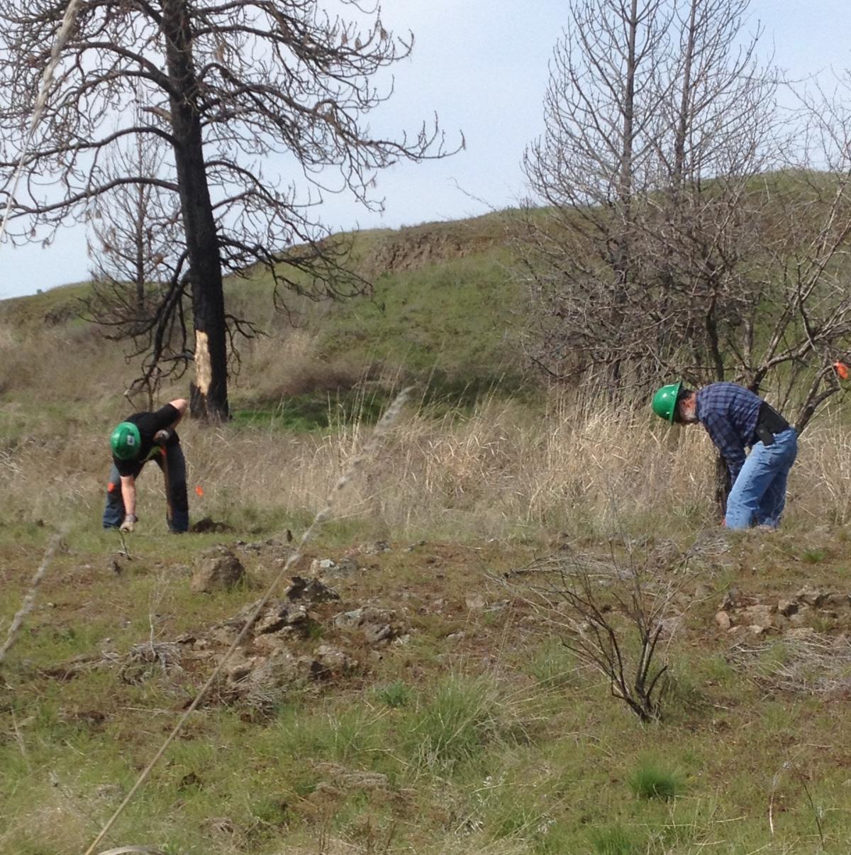 Clearing trail at Fish Trap Lake with Washington Trail Association