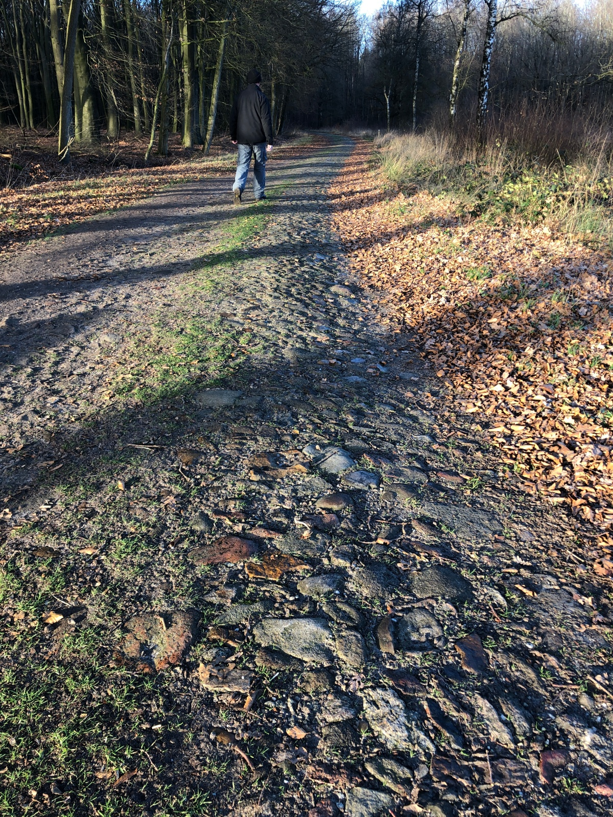 Stone road in the Drenthe forest