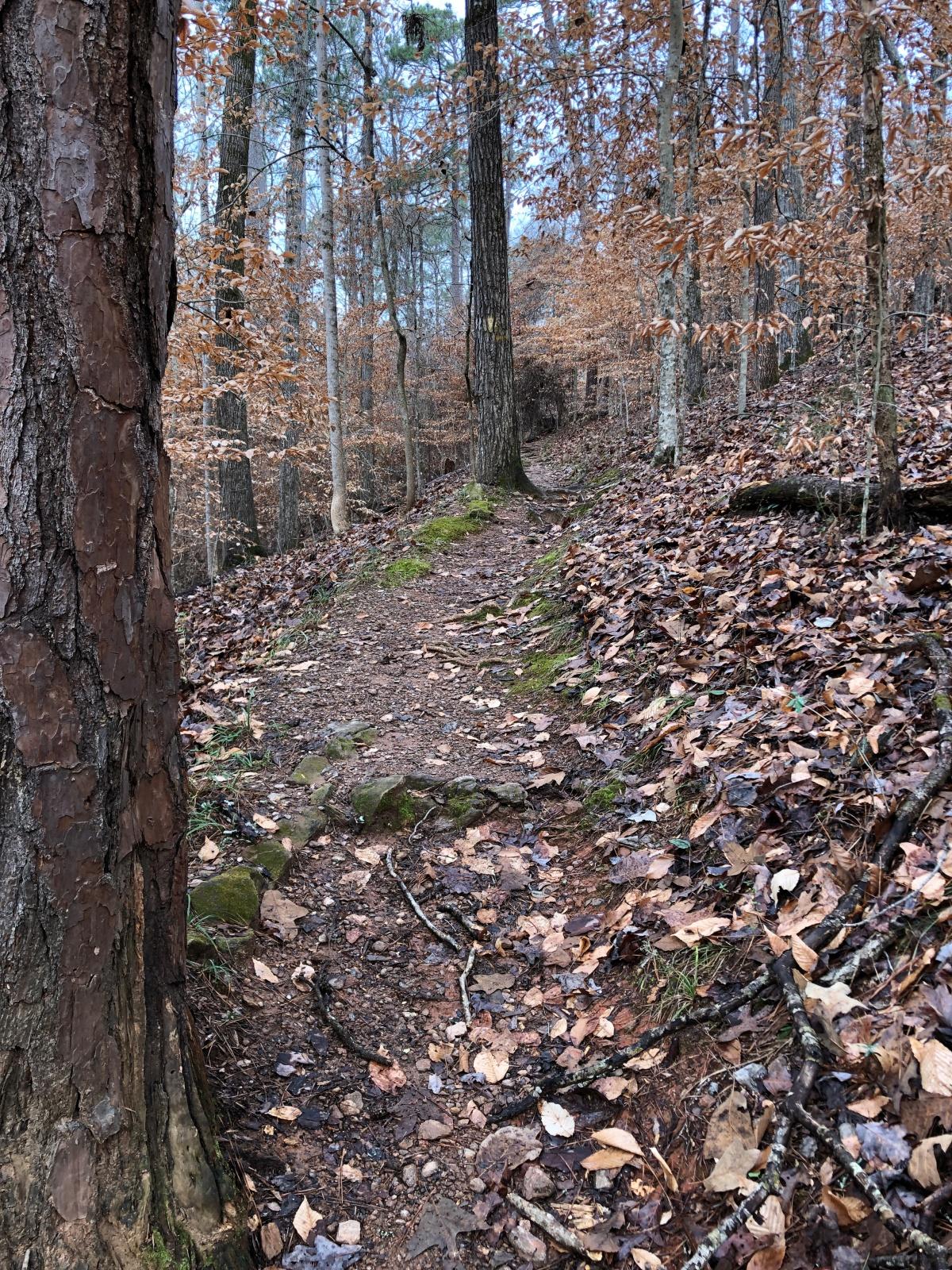 Hiking trail at Indian Springs State Park, GA