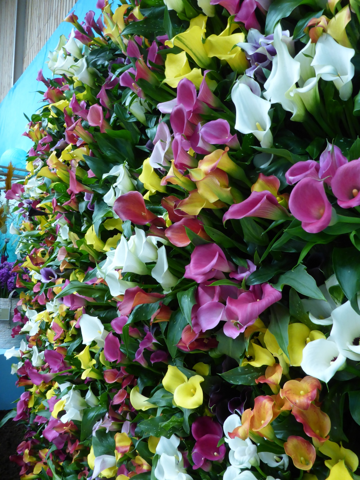 A wall of lilies