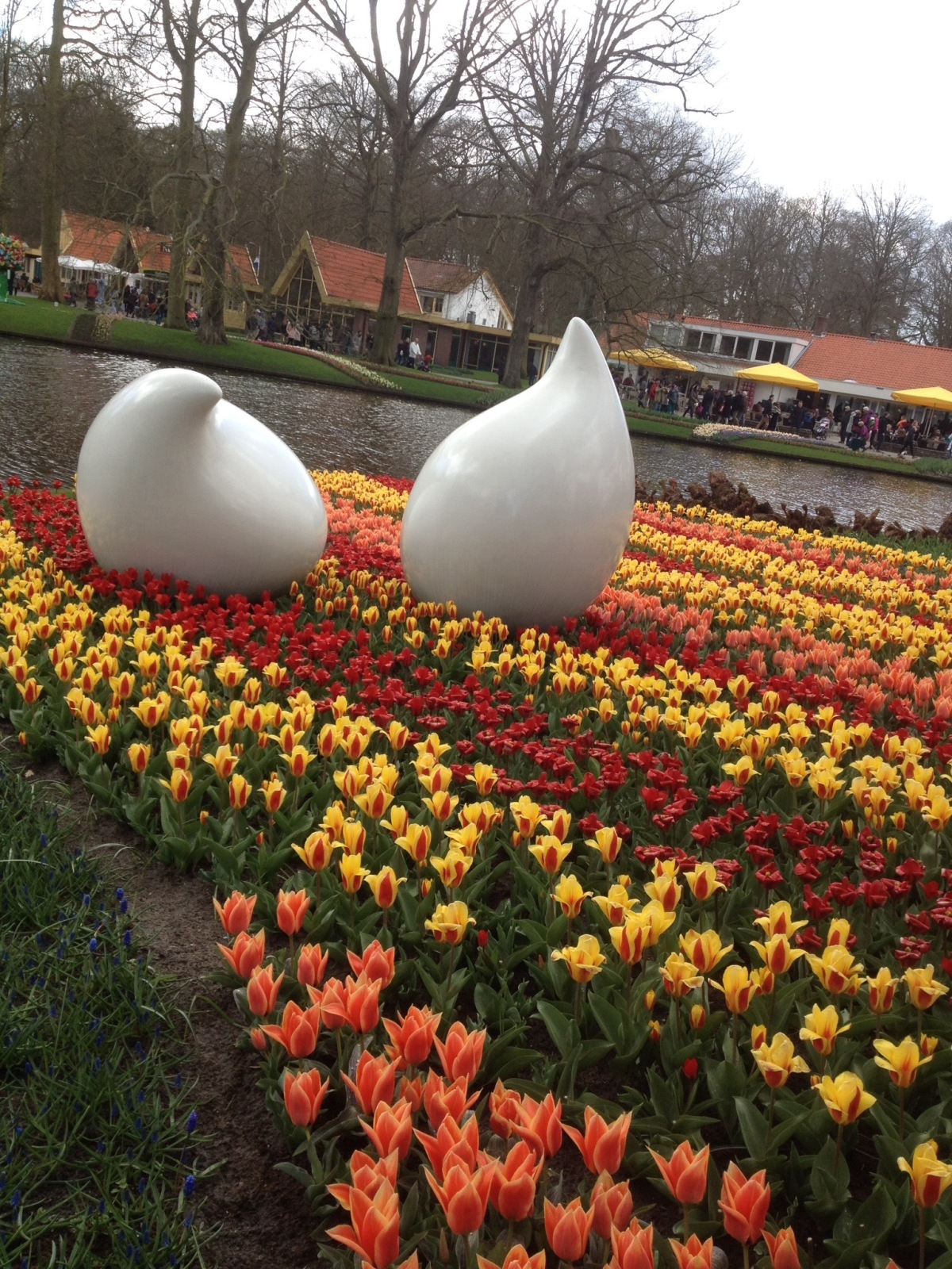 Keukenhof in full bloom 2015 - My work building in the the background.